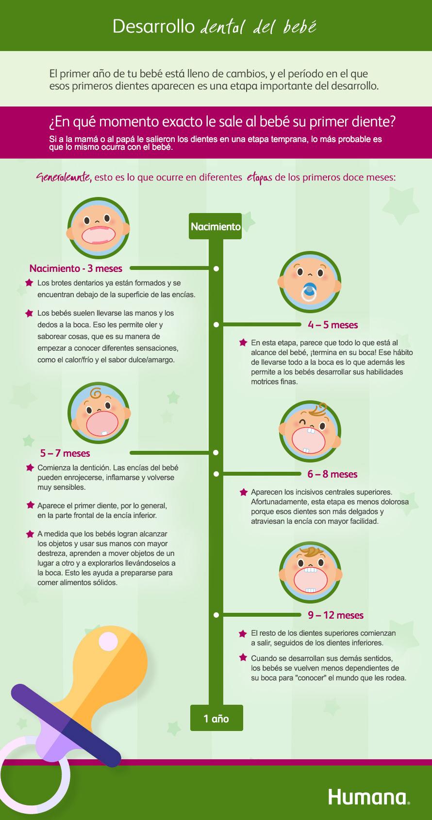 El primer diente del bebé - Todo sobre la dentición de los bebés ... f768f8b7c7bf